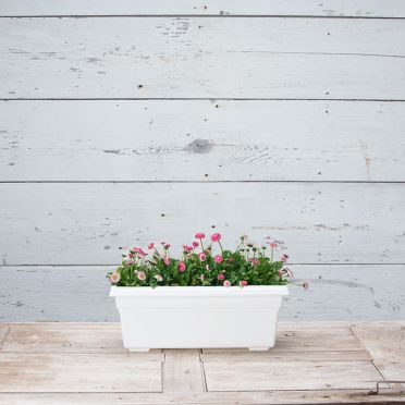 Countryside Flower Box, 18-Inch, White
