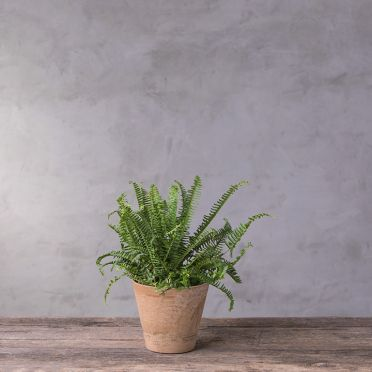Cali Round Planter, 8-Inch, Taupe