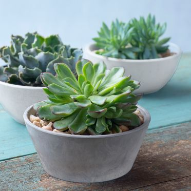 Mini Bowl Planter